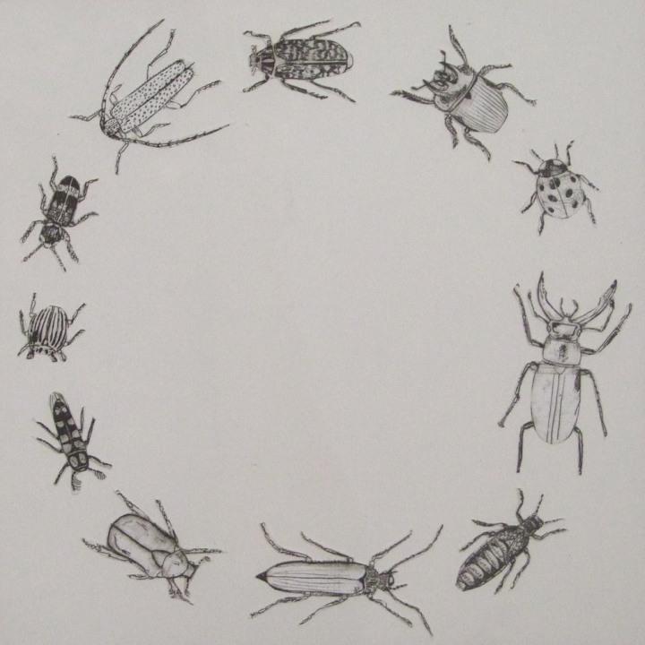 Käferkreis, Collage, 20x20cm, 2013