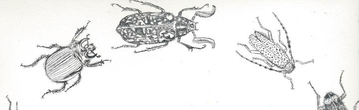 coleoptera detail magdalena glas