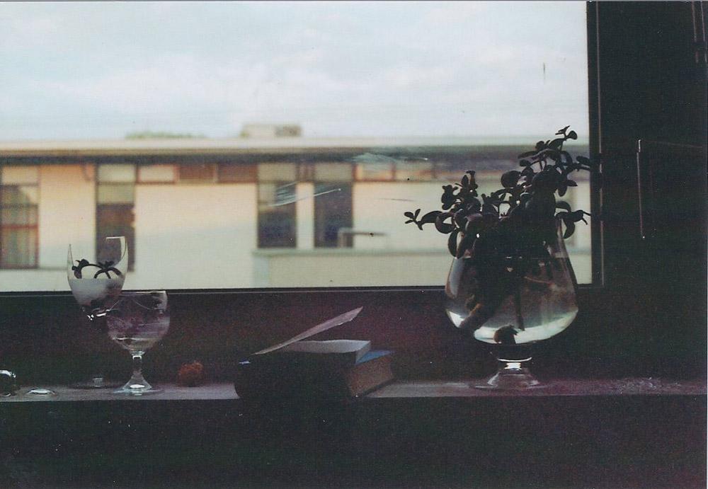 Mondgarten, analoge Fotografie, 2014